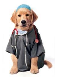 dog-doctor-vet