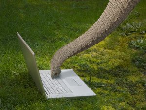 Elephant-Laptop