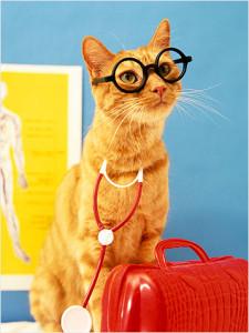 doctor-cat