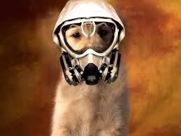 dog gas