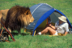 lion tent 2