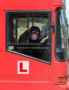 monkey-bus-driver