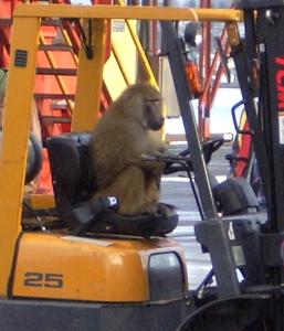 monkey_forklift