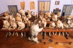 rabbits-school