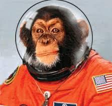 nasa-monkey