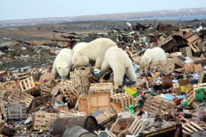 Garbage_bear