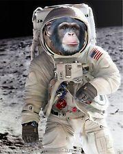 monkey atronaut