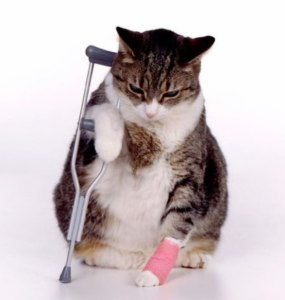 injured-cat