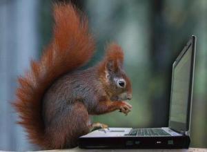 squirrel-elearning