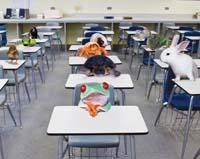 classroom-animals