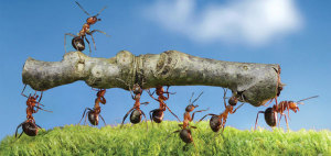 working-ants